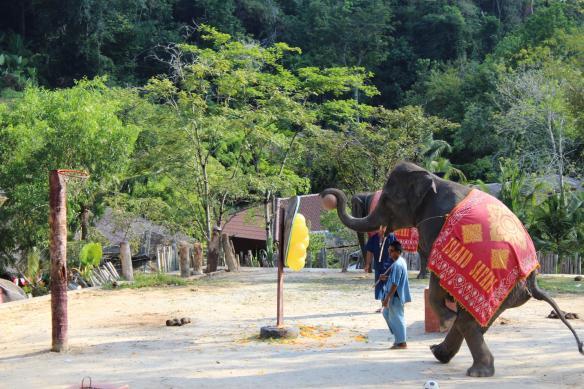 Elephant show 3