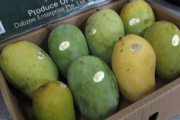 OJ Mangoes Chousa Mangoes
