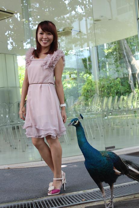 My Pet Peacock