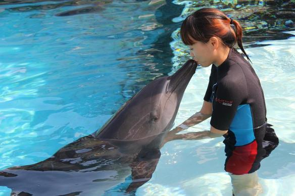 Dolphin Kiss Resorts World Sentosa Dolphin Island