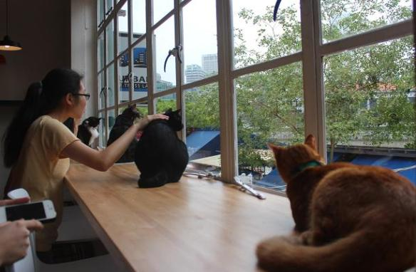 Singapore Cat Cafe Neko no Niwa