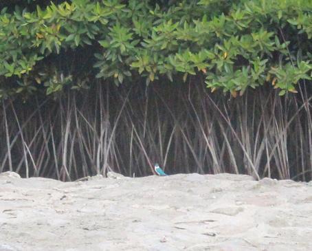 Pulau Semakau bird watching