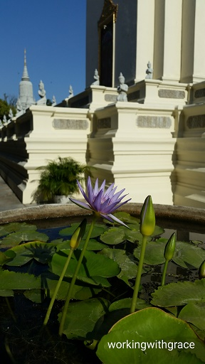 Cambodia Royal Palace Water Lily