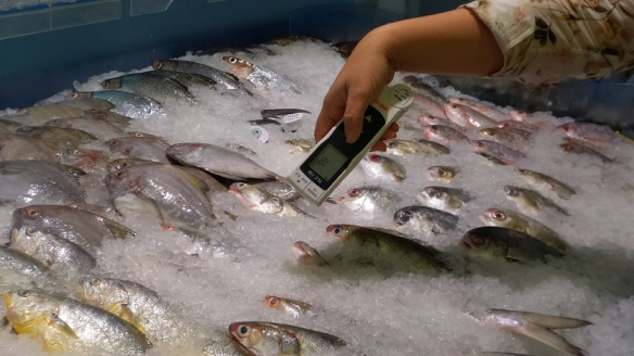 Fish Bed Temperature Checks
