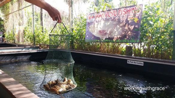 Fish at Aranda ikan puyu fishing