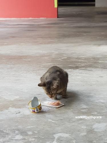 Punggol Community Cat