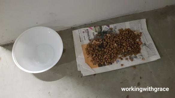 Punggol Community Cat Feeder