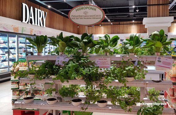 pekanbaru green farm